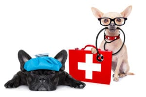 First Aid For Dogs Course